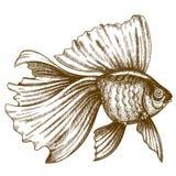 Ilustração do peixe dourado da gravura no fundo branco Fotografia de Stock Royalty Free