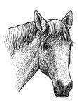 Ilustração do retrato da cabeça de cavalo, desenho, gravura, tinta, linha arte, vetor ilustração royalty free