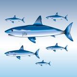 Ilustração do tubarão Imagem de Stock