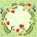 Ilustração do vetor com colibris, borboletas, plumeria e hibiscus Ilustrações florais para cartões de casamento do convite ilustração stock