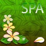 Ilustração do vetor com folhas exóticas, flores Imagem de Stock