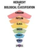 Ilustração do vetor com graus taxonomic principais Imagens de Stock
