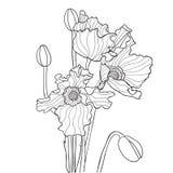 Ilustração do vetor com a papoila em cores preto e branco Fotografia de Stock