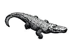 Ilustração do vetor do crocodilo ilustração royalty free