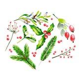 Ilustração do vetor da aquarela Brancges do abeto, visco, azevinho agradavelmente, dor cor-de-rosa e galho e bagas cor-de-rosa do Imagem de Stock Royalty Free