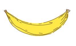 Ilustração do vetor da banana, esboço e estilo da garatuja, bananas da tração da mão Fotografia de Stock Royalty Free