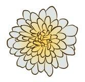 Ilustração do vetor da flor do áster Imagens de Stock Royalty Free