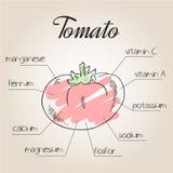 Ilustração do vetor da lista nutriente para o tomate Fotos de Stock Royalty Free