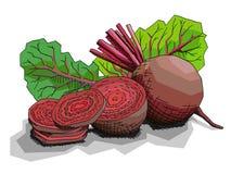 Ilustração do vetor das beterrabas vermelhas vegetais do desenho Fotografia de Stock