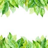 Ilustração do vetor das folhas da mola Fundo da aguarela Fotografia de Stock Royalty Free