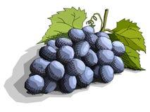 Ilustração do vetor de bagas das uvas do desenho Fotos de Stock Royalty Free