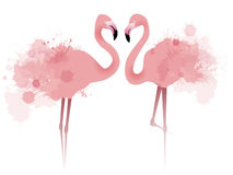 Ilustração do vetor de flamingos do rosa dos pares Fotografia de Stock Royalty Free