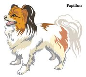 Ilustração do vetor de Papillon Imagem de Stock Royalty Free