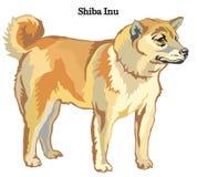 Ilustração do vetor de Shiba Inu Imagem de Stock Royalty Free