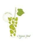 Ilustração do vetor do alimento biológico Imagem de Stock