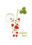 Ilustração do vetor do alimento biológico Fotografia de Stock
