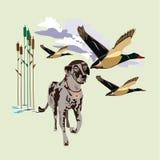 Ilustração do vetor do conceito do cão de caça no estilo liso Fotografia de Stock