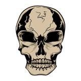 Ilustração do vetor do crânio ilustração do vetor
