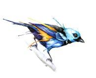 Ilustração do vetor do estilo da aquarela do pássaro Foto de Stock