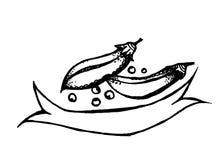 Ilustração do vetor do feijão maduro Fotografia de Stock