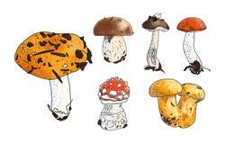 Ilustração do vetor do grupo dos cogumelos: russula, boleto Fotografia de Stock