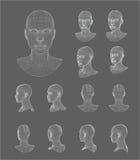 Ilustração do vetor do modelo da cabeça 3d de Wireframe Fotos de Stock