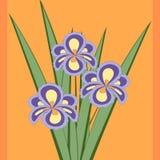 Ilustração do vetor do ramalhete de flores da íris Foto de Stock Royalty Free