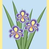 Ilustração do vetor do ramalhete de flores da íris Imagem de Stock
