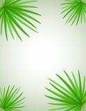 Ilustração do vetor do ramo da palma Foto de Stock Royalty Free