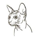 Ilustração do vetor do sphynx do gato do esboço Foto de Stock
