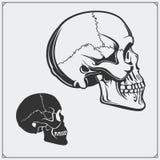 Ilustração do vetor dos crânios Imagens de Stock Royalty Free