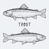 Ilustração do vetor dos peixes da truta Fotos de Stock