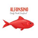 Ilustração do vetor dos peixes do Alfonsino no estilo dos desenhos animados Foto de Stock