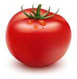 Tomate vermelho ilustração royalty free