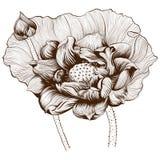 Ilustração do vetor Flores e botões de Lotus em um fundo branco Plantas da perfumaria e do cosmético wallpaper Composição decorat ilustração royalty free