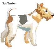 Ilustração do vetor do Fox Terrier Foto de Stock