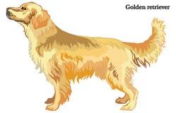 Ilustração do vetor do golden retriever Imagem de Stock Royalty Free