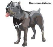 Ilustração do vetor do italiano do corso do bastão Imagens de Stock