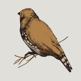 Ilustração do vetor Pássaro, mão-desenho Imagens de Stock