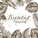 Ilustração do vetor Plantas tropicais, folhas exóticas, folha da banana, palma da areca, Botânica, flora Quadro tropical, lugar p Fotos de Stock Royalty Free