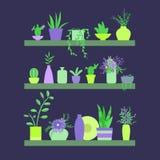 Ilustração do vetor Prateleiras com plantas e vasos das flores Imagens de Stock