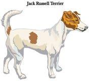 Ilustração do vetor do terrier de Jack Russell Fotos de Stock