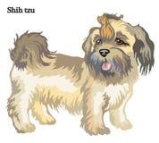Ilustração do vetor do tzu de Shih Fotografia de Stock