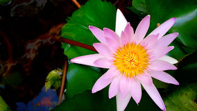 Ilustração do zen da flor dos lótus Fotografia de Stock