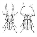 Ilustração dos besouros em um fundo do wight Ilustração do vetor Fotos de Stock