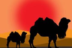 Ilustração dos camelos Fotos de Stock Royalty Free