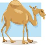 Ilustração dos desenhos animados do camelo do dromedário Imagem de Stock