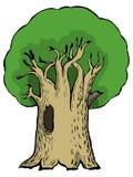 Ilustração dos desenhos animados do carvalho Fotos de Stock
