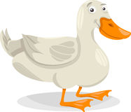 Ilustração dos desenhos animados do pássaro da exploração agrícola do pato Foto de Stock Royalty Free