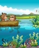 Dois castores que jogam no lago ilustração royalty free